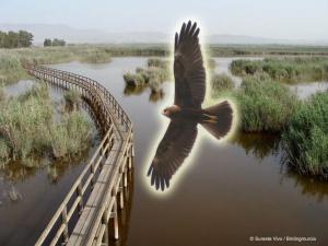 Birding Murcia - rutas 06b