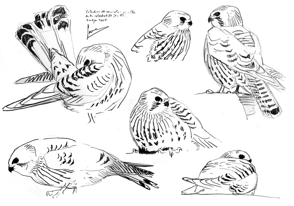 Jose Antonio Sencianes Birdingmurcia