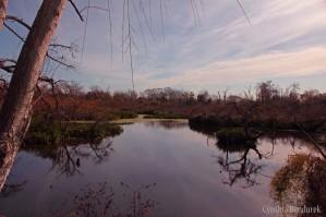 05 Birdingmurcia - Cynthia Bandurek - landscape