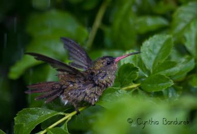 08 Birdingmurcia - Cynthia Bandurek - landscape