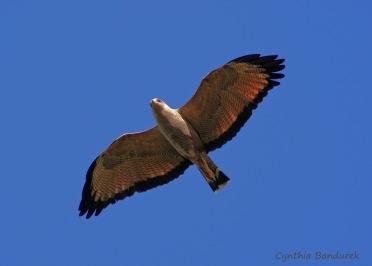 11 Birdingmurcia - Cynthia Bandurek