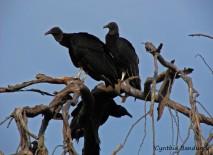 12 Birdingmurcia - Cynthia Bandurek