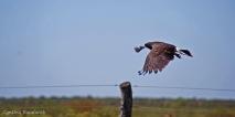 13 Birdingmurcia - Cynthia Bandurek
