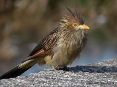 15 Birdingmurcia - Cynthia Bandurek