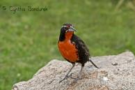 22 Birdingmurcia - Cynthia Bandurek