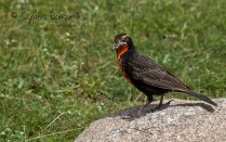 24 Birdingmurcia - Cynthia Bandurek