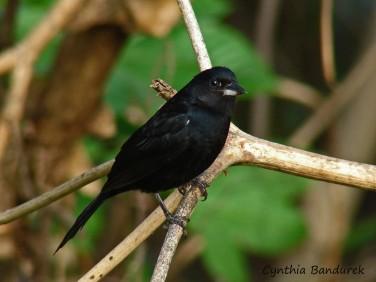 26 Birdingmurcia - Cynthia Bandurek