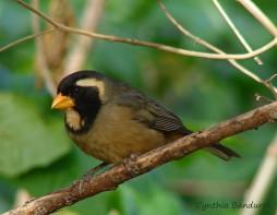 27 Birdingmurcia - Cynthia Bandurek