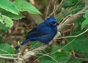 30 Birdingmurcia - Cynthia Bandurek