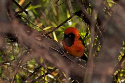 31 Birdingmurcia - Cynthia Bandurek