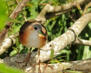 32 Birdingmurcia - Cynthia Bandurek