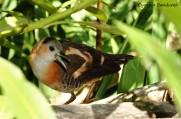 33 Birdingmurcia - Cynthia Bandurek