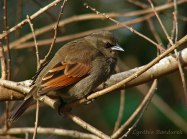 34 Birdingmurcia - Cynthia Bandurek