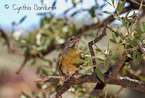 40 Birdingmurcia - Cynthia Bandurek