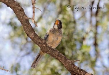 41 Birdingmurcia - Cynthia Bandurek