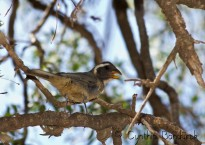 42 Birdingmurcia - Cynthia Bandurek