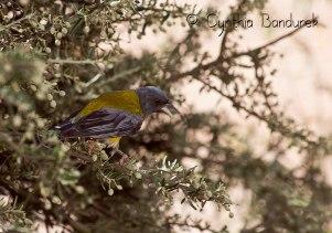 44 Birdingmurcia - Cynthia Bandurek