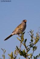 50 Birdingmurcia - Cynthia Bandurek