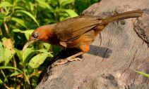 33 Birding Murcia - SUDHIR GARG