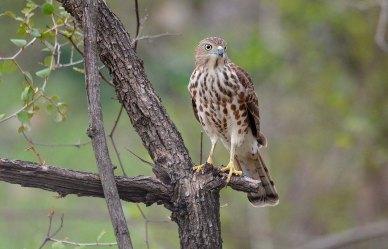 41 Birding Murcia - SUDHIR GARG