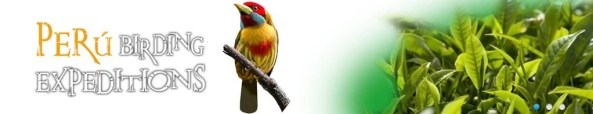 Perú Birding Expeditions 1