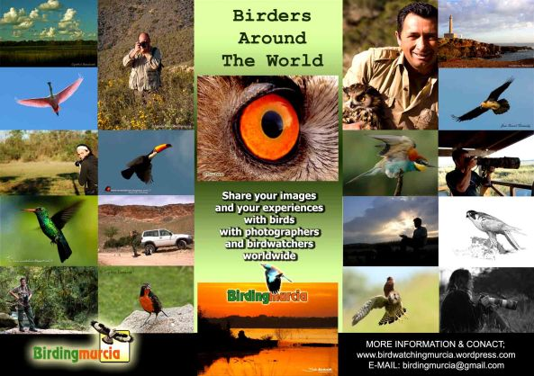 Poster BIRDERS-b