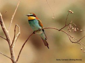 30 BIRDERS Santy Carrasco