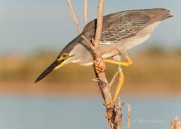 10 BIRDERS Martin Iriarte-Garcita Azulada