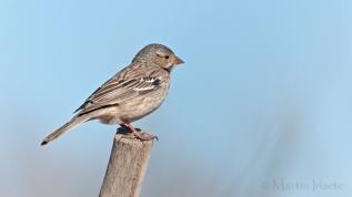 32 BIRDERS Martin Iriarte-Yal-Negro (H)