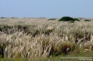 04 BIRDERS H Tolosa-Punta Rasa