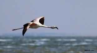 05 Birdingmurcia - Marcelo Cruz