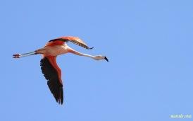 06 Birdingmurcia - Marcelo Cruz