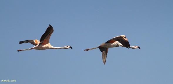 07 Birdingmurcia - Marcelo Cruz