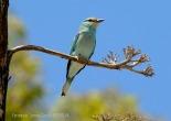13 BIRDINGMURCIA - Biovisual - carraca