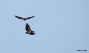 15 Birdingmurcia - Marcelo Cruz