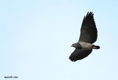 18 Birdingmurcia - Marcelo Cruz