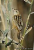 21 BIRDINGMURCIA - Biovisual - buitron