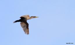 22 Birdingmurcia - Marcelo Cruz
