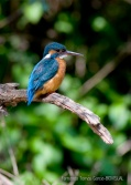 23 BIRDINGMURCIA - Biovisual - martin pescador