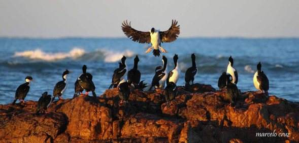 27 Birdingmurcia - Marcelo Cruz