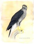 29 BIRDINGMURCIA - Biovisual - azor