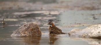 29 Birdingmurcia - Marcelo Cruz