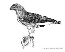 31 BIRDINGMURCIA - Biovisual - A Culebrera
