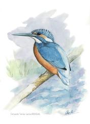 33 BIRDINGMURCIA - Biovisual - martin pescador