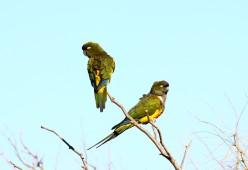 33 Birdingmurcia - Marcelo Cruz