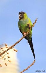 35 Birdingmurcia - Marcelo Cruz