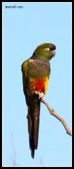36 Birdingmurcia - Marcelo Cruz