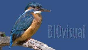 biovisual-banner