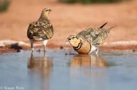 07 Birdingmurcia - Kique Ruiz