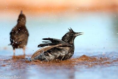 08 Birdingmurcia - Kique Ruiz